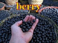 berry jagoda