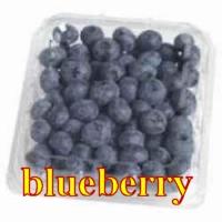 blueberry borówka amerykańska